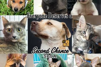 Everyone Deserves a Second Chance